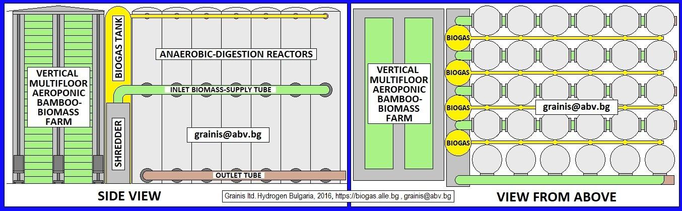 BAMBOO ECONOMY