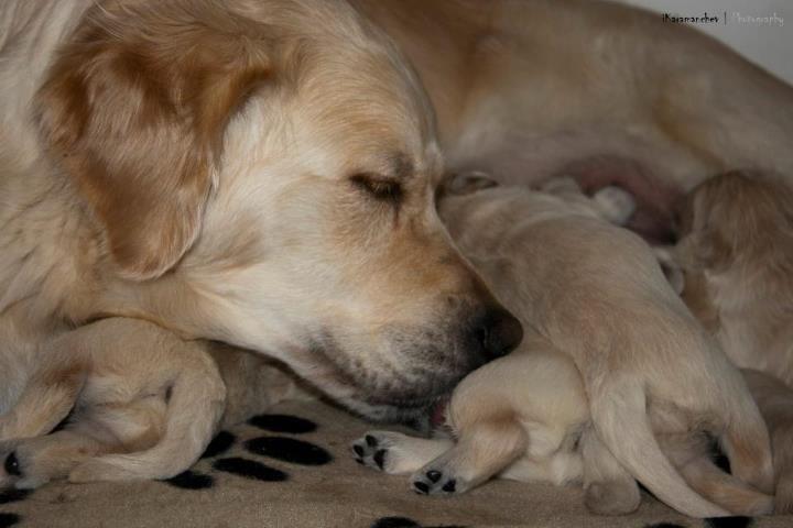 Кученца/Puppies