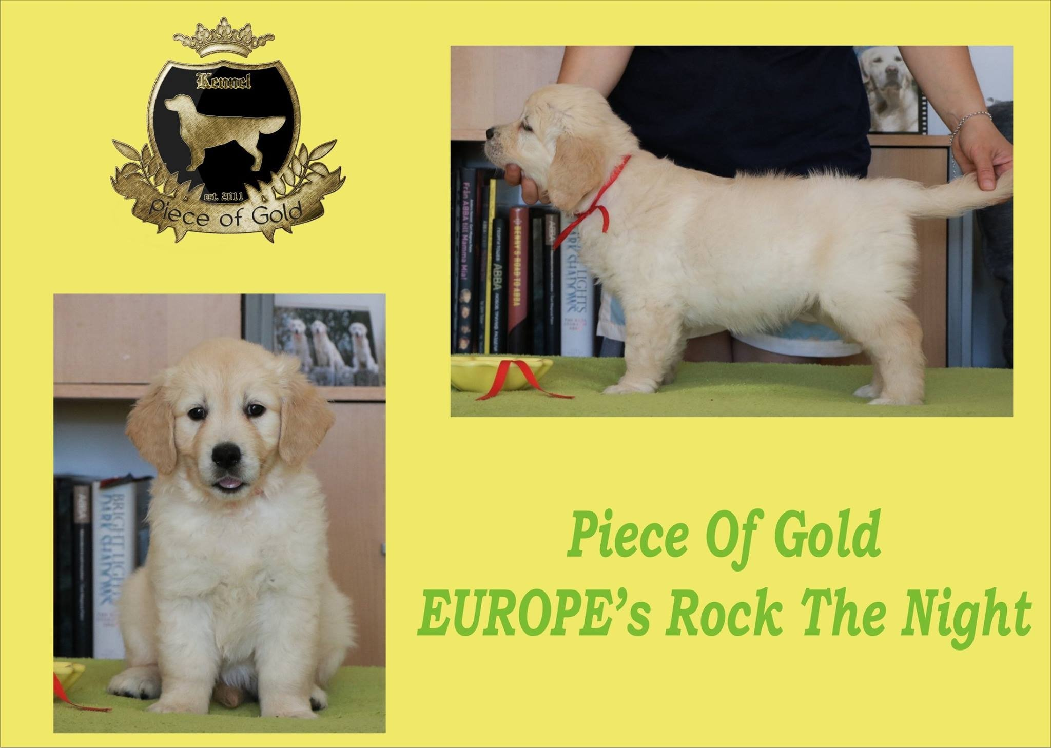 Piece Of Gold Europe's Rock The Night - Fifty