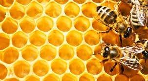 Пчеларство 2014 – 2016 г.
