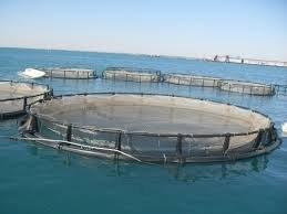 Морско дело и рибарство