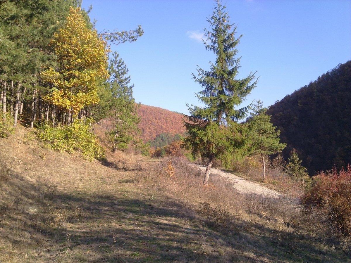 есен в Дефилето