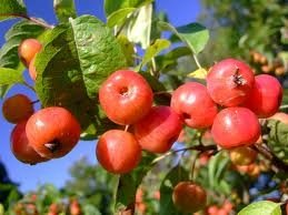 Ябълков оцет – прочетете над 50 изпитани рецепти за отслабване, изчистване и лечение